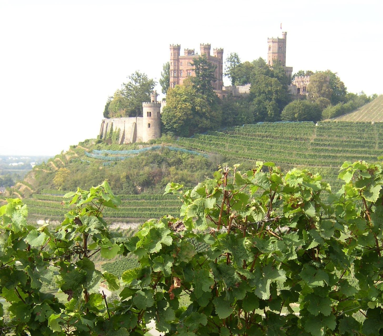 Weingut-Kiefer-Weinberg-Wein-Erlesen-kaufen-Schloss-Ortenberg